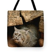 A Bobcat Pokes Out From Its Alcove Tote Bag