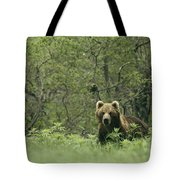 A Brown Bear In Tall Grasses Tote Bag