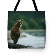 A Brown Bear Standing At Waters Edge Tote Bag