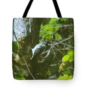 A Busy Woodpecker  Tote Bag