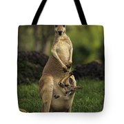 A Captive Red Kangaroo Macropus Rufus Tote Bag