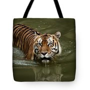 A Captive Sumatran Tiger Panthera Tote Bag