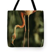 A Caribbean Flamingo Stands On Its Nest Tote Bag