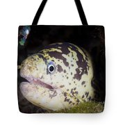 A Chain Moray Eel Peers Out Of Its Hole Tote Bag