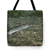 A Chain Pickerel Wimming The River Tote Bag by Terry Moore