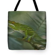 A Chameleon With Yellow Eyes Balances Tote Bag