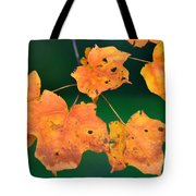 A Change Of Season Tote Bag