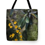A Close View Of A Beautiful Dendrobium Tote Bag