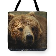 A Close View Of A Captive Kodiak Bear Tote Bag
