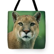 A Close View Of A Captive Male Mountain Tote Bag