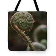 A Close View Of A Fiddlehead Fern Frond Tote Bag