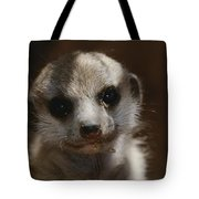 A Close View Of A Meerkat Suricata Tote Bag