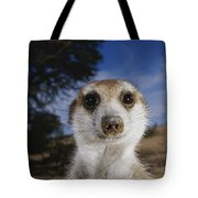 A Close View Of An Adult Meerkat Tote Bag