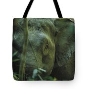 A Close View Of An Asian Elephant Tote Bag