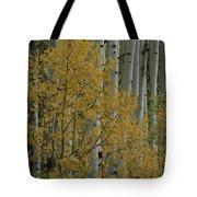 A Close View Of Quaking Aspen Trees Tote Bag