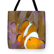 A Clown Anemonefish In A Purple Tote Bag