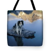 A Collie Perches Itself On A Rock Tote Bag