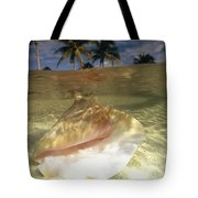 A Conch Shell Rests Beneath The Clear Tote Bag