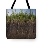A Cross Section Of A Sunflower Root Tote Bag