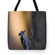 A Downy Woodpecker, Picoides Pubescens Tote Bag