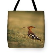 A Eurasian Hoopoe With An Insect Tote Bag