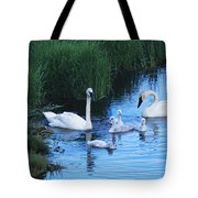 A Family Of Trumpeter Swans Swims Tote Bag