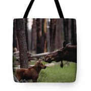 A Female Moose Nuzzles Her  Young Tote Bag