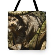 A Female Northern Lynx With Her Thick Tote Bag