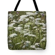 A Field Of Queen Annes Lace Tote Bag