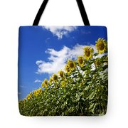 A Field Of Sunflowers . Auvergne. France Tote Bag