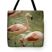 A Flock Of Chilean Flamingos Wading Tote Bag