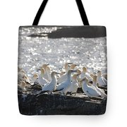 A Flock Of Gannets Standing On A Rock Tote Bag