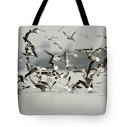 A Flock Of Laughing Gulls Larus Tote Bag