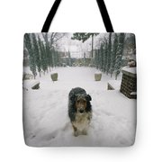 A Forlorn And Snow-dusted Sheltie Tote Bag