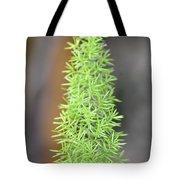 A Foxtail Fern Closeup Tote Bag