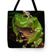 A Frog Phylomedusa Bicolor Perched Tote Bag