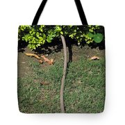 A Garden Water Pipe Emerging From Within A Hedge Tote Bag
