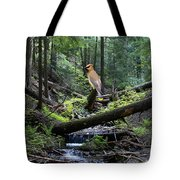 A Giant Cedar Waxwing On Mt Spokane Tote Bag