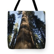A Giant Redwood In The Mariposa Grove Tote Bag