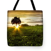 A Golden Evening  Tote Bag