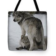 A Gray Wolf, Canis Lupus, Stands Tote Bag