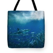 A Great White Shark Swims Close Tote Bag
