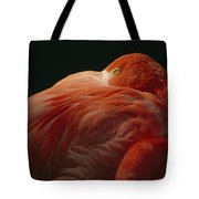A Greater Flamingo With Its Head Tote Bag
