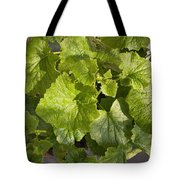 A Green Leafy Vegetable Plant After Watering In Bright Sunrise Tote Bag
