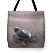 A Green Sea Turtle Hatchling Races Tote Bag