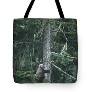 A Grizzly Bear Clings To A Fir Tree Tote Bag