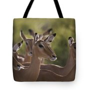 A Group Of Alert Impalas In Samburu Tote Bag