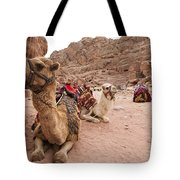 A Group Of Camels Sit Patiently Tote Bag