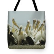 A Group Of Eastern White Pelicans Tote Bag