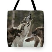 A Group Of Gray Wolves, Canis Lupus Tote Bag